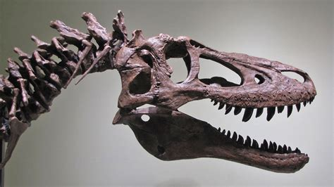 A baby Tyrannosaurus Rex fossil is up for sale on eBay for